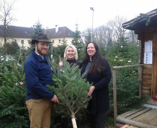 Forstverwaltung Fridau (Tacoli) spendet Christbäume